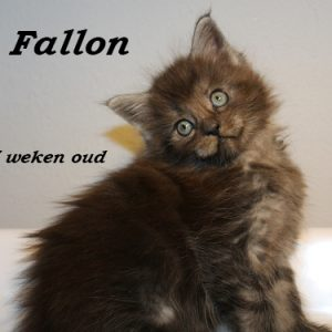 Fallon 7 weken (2) W