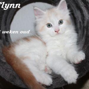 Flynn 8 weken (2) W