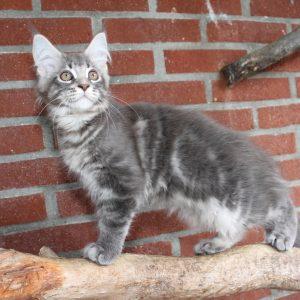 Kitten 2 Mindy, 13 weken (1)