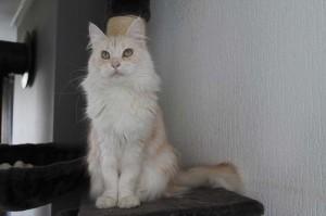 Alana (4)