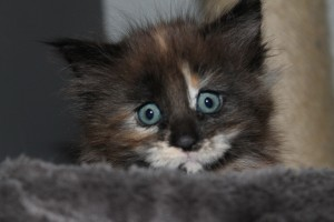 Eayla 7 weken (W1)