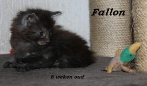 Fallon 6 weken (2) W