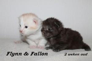 Flynn & Fallon 2 weken (2) W