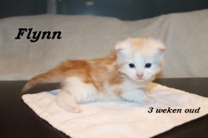 Flynn 3 weken (1) W